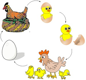 CBSE NCERT Notes Class 8 Biology Reproduction in Animals