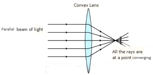 Cbse Ncert Solution For Class 7, Can Convex Mirrors Produce Enlarged Image